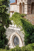 Churches rooftop with tendrils growing thickly — Stock Photo