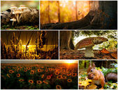 Collage autumn — Stock Photo