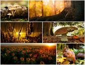 Collage autumn — Stock Photo