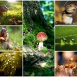 Collage,agricultuur, beautiful, closeup, collage,collection, color, concept, earth, garden,  wood, harvest,healthy,, kleurri, natural, nature,organic, , season ,tree,  yellow, hedgehog, squirrel, — Stock Photo
