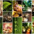 Collage,agricultuur, beautiful, closeup,collection, color, concept, earth, garden, wood, harvest, kleurrijk, natural, nature,organic, plant, season ,tree, yellow, hedgehog, squirrel, — Stock Photo #31962695