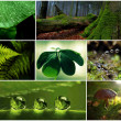 Collage,green,paddestoel,earth, garden,  wood — Stockfoto