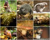 Agricultuur, krásné, closeup, koláž, kolekce, barva, koncepce, země, zahrada, dřevo, sklizeň, zdravé,, kleurrijk, přírodní, příroda, organické,, závod,, sezónu, strom, žlutá, ježek, veverka, — Stock fotografie