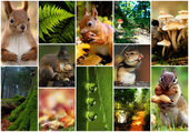 Collage,agricultuur, beautiful, closeup,collection, color, concept, earth, garden, wood, harvest, kleurrijk, natural, nature,organic, plant, season ,tree, yellow, hedgehog, squirrel, — Stock Photo