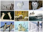 Collage des animaux et la nature blanc — Photo