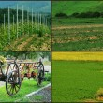 Romanian rural landscapes. — Stock Photo #29443501