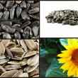 Sunflower seeds collage. — Stock Photo
