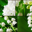 Lilly of the valley collage. — Stock Photo