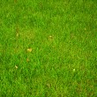 Green grass texture. — Stock Photo
