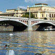 White swans on Vltava river. — Stock Photo