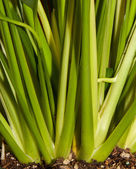 Plant pattern — Stock Photo