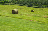 Fresh roled hay on a green pasture — Stock Photo
