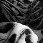 Fossil bones — Stock Photo #34598801
