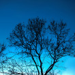 Tree silhouette — Stock Photo #37747209