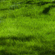 LawnTexture — Stock Photo