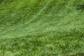LawnTexture — Stock Photo