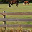 Horses behind wood fence — Stock Photo