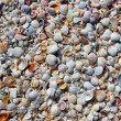 Small seashells — Stock Photo
