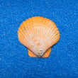 Shell on blue sand — Stock Photo