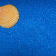 Stock Photo: Shell on blue sand