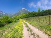 Bergweg door lente — Stockfoto