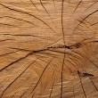 Texture of tree stump with tree rings for a background — Stock Photo