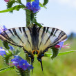 Stock Photo: Beautiful butterfly