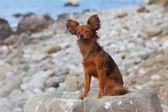 Beautiful dog on stone — Stock Photo