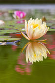Triton near water lilies — Stock Photo