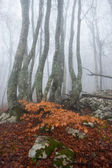 Misty autumn forest — Stock Photo