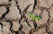 Fondo de tierra agrietada — Foto de Stock