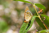 Butterfly on green sheet — Stock Photo