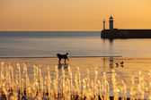 Hermoso paisaje marino con faro — Foto de Stock