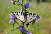 Hermosa mariposa — Foto de Stock