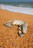 Destroying fish — Stock Photo