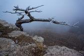 Amazing view from the mountain Ai-Petri — Stock Photo
