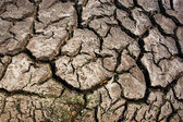 Cracked earth background — Stock Photo