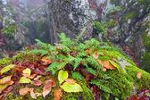Foglie di felce verde — Foto Stock