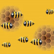 Bee and honeycombs — Stock Photo