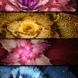Four abstract flower banners — Foto Stock #28666845