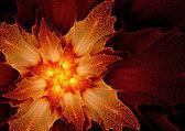 Fiery flower — Stock Photo
