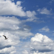 Blue cloudy sky background with single bird — Stock Photo #34267633