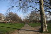 Parque verde — Foto de Stock