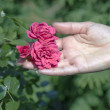 Stock Photo: Roses on palm.