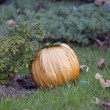 Man-made pumpkin. — Stock Photo