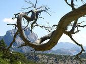 Bare tree branch. — Stock Photo