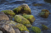 Algae on the boulders. — Stok fotoğraf