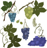 Vector illustration of grapes — Stock Vector