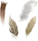 Various types of feathers — Stock Vector