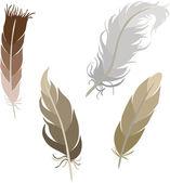 Various types of feathers — Stok Vektör